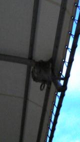 2010年 5月5日ツバメの巣