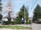 2012年4月25日臼田小学校前桜01